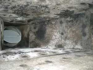 What is Mold in Air Ducts & how to prevent and remove it